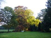 Doorkijk naar het bos en weiland, met prachtige bomen